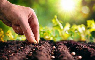 lavori da fare a marzo nell'orto nel frutteto e nel giardino